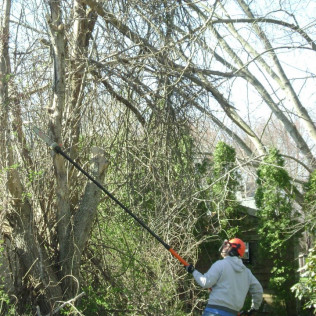 tree services in Westport, MA
